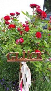 Bild aus dem Garten mit Blumen und einem Schild auf dem