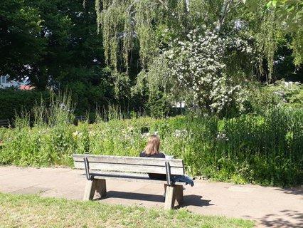 Person sitzt auf einer Bank im Park und liest ein Buch
