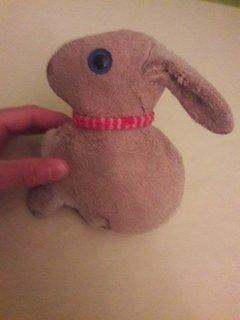Hasi mit seinen langen Ohren